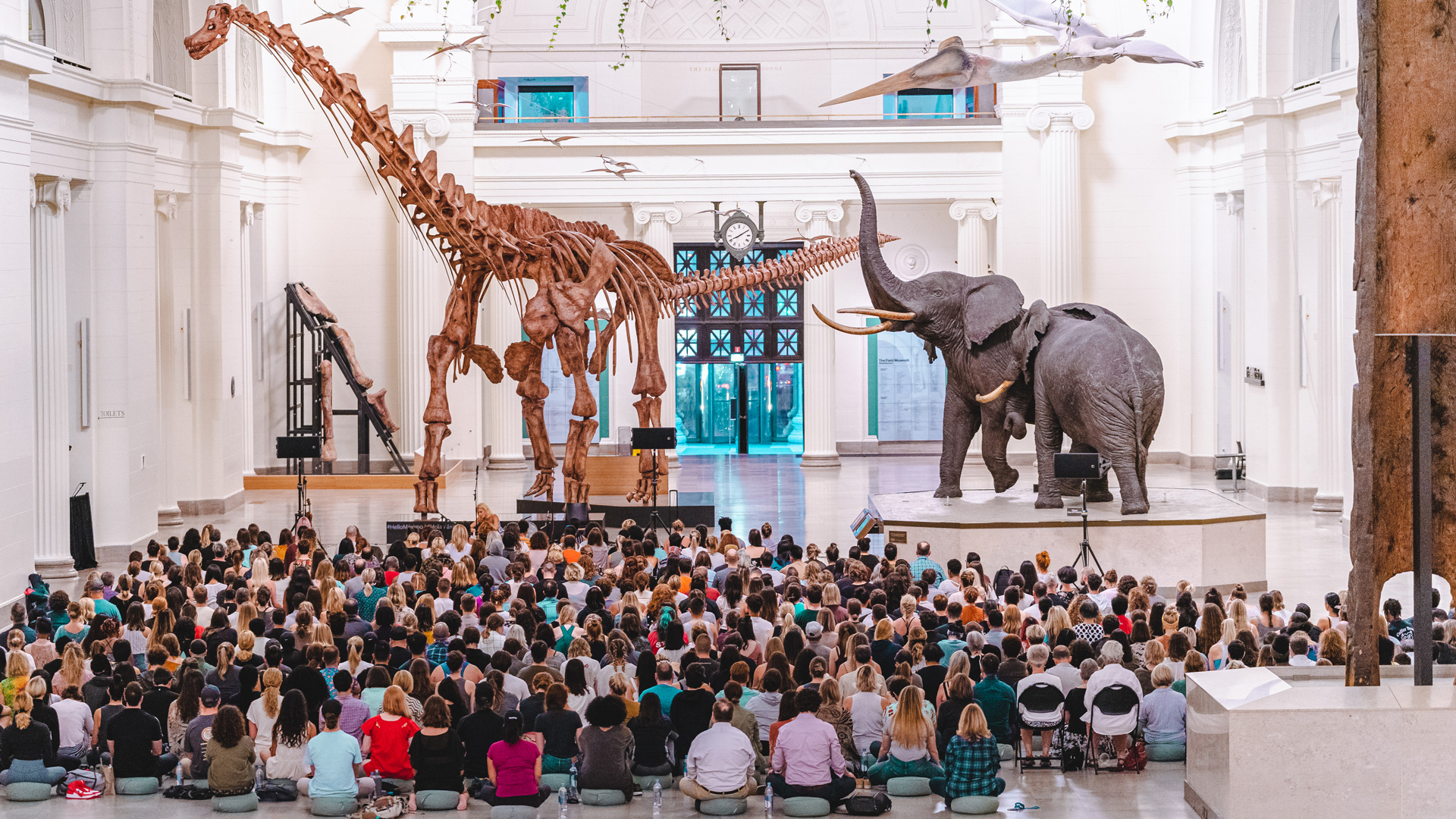 The Big Quiet, American Museum of Natural History (Photo: Jackie Robertson)